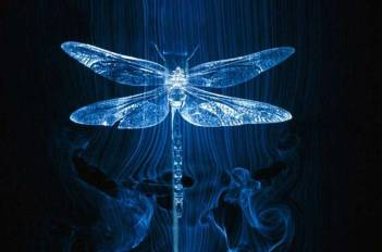 dragonfly-wind-tunnel_26492
