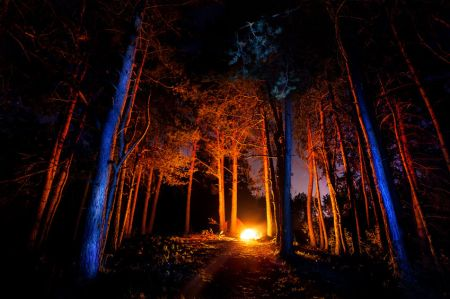 46490814 - dark forest with campfire at night